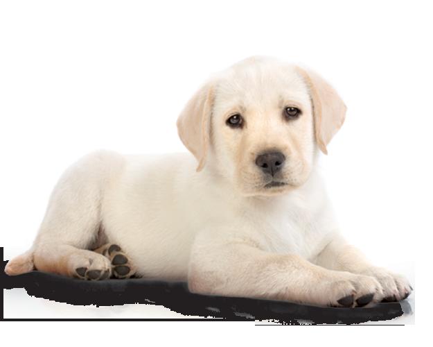 Witte puppy